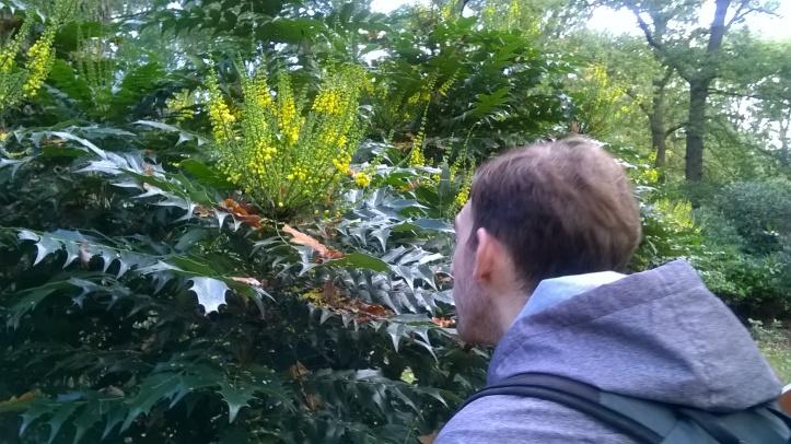 Tropical Bushy