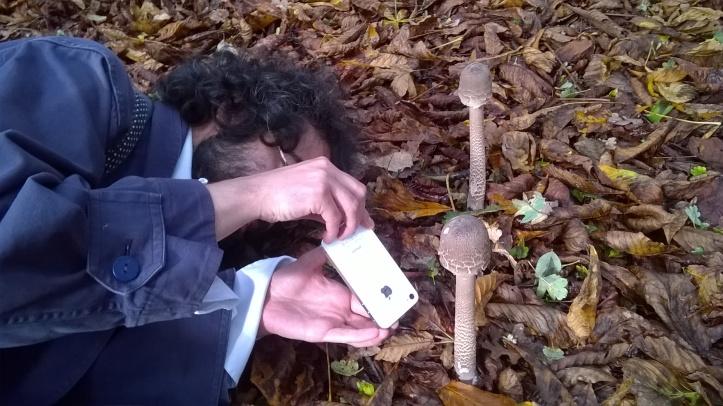 Mushroom contortions