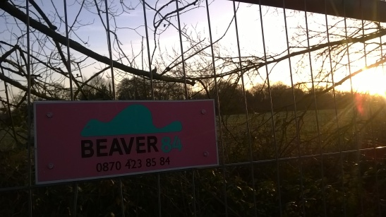 BEAVER 84
