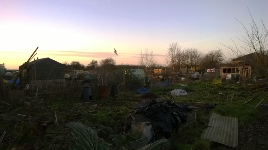 Melancholic allotments II