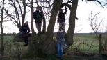 Tree gang
