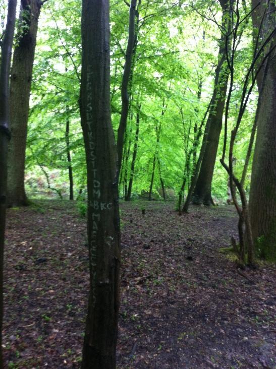 Camlet tree-writing
